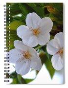 Cherry Blossom 2 Spiral Notebook