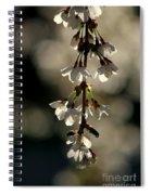 Cherry Blossom Bokeh Spiral Notebook