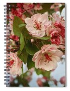 Cherry Blossom Pink Spiral Notebook