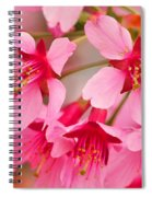 Cherry Blossom Special Spiral Notebook