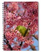 Cherry Blossom Time Spiral Notebook