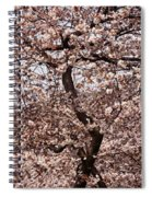 Cherry Blossom Trees In Potomac Park Spiral Notebook