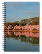 Cherry Blossoms 2013 - 001 Spiral Notebook