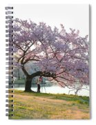 Cherry Blossoms 2013 - 003 Spiral Notebook