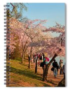 Cherry Blossoms 2013 - 007 Spiral Notebook