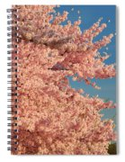 Cherry Blossoms 2013 - 013 Spiral Notebook