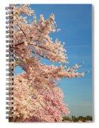 Cherry Blossoms 2013 - 014 Spiral Notebook