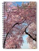 Cherry Blossoms 2013 - 025 Spiral Notebook