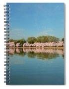 Cherry Blossoms 2013 - 026 Spiral Notebook