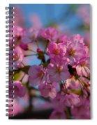 Cherry Blossoms 2013 - 031 Spiral Notebook