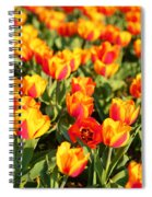 Cherry Blossoms 2013 - 032 Spiral Notebook