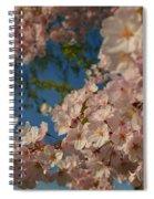 Cherry Blossoms 2013 - 035 Spiral Notebook