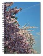 Cherry Blossoms 2013 - 046 Spiral Notebook