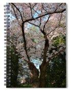 Cherry Blossoms 2013 - 056 Spiral Notebook