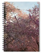 Cherry Blossoms 2013 - 065 Spiral Notebook