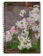 Cherry Blossoms 2013 - 067 Spiral Notebook