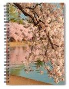 Cherry Blossoms 2013 - 080 Spiral Notebook