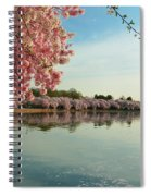 Cherry Blossoms 2013 - 084 Spiral Notebook