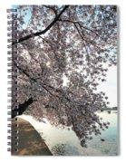 Cherry Blossoms 2013 - 092 Spiral Notebook