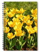Cherry Blossoms 2013 - 094 Spiral Notebook