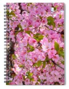 Cherry Blossoms 2013 - 097 Spiral Notebook