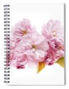 Cherry Blossoms Arrangement Spiral Notebook