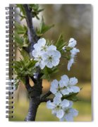 Cherry Blossoms In White Spiral Notebook