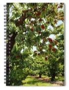 Cherry Orchard  Spiral Notebook
