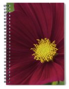 Cherry Petals Spiral Notebook