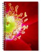 Cherry Pie Rose 01a Spiral Notebook