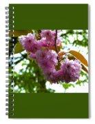 Cherry Tree Blossom Spiral Notebook