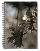 Cherry Tree Blossom Macro Spiral Notebook
