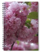 Cherry Tree Blossoms Spiral Notebook