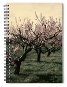 Cherry Trees 2.0 Spiral Notebook