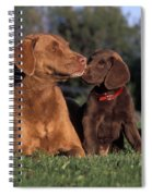 Chesapeake Bay Retrievers Spiral Notebook