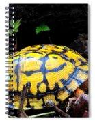 Chesapeake Box Turtle Spiral Notebook