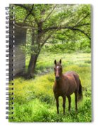 Chestnut Horse In A Sunny Meadow Spiral Notebook