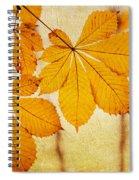 Chestnut Leaves At Autumn Spiral Notebook