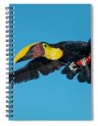 Chestnut-mandibled Toucan Flying Spiral Notebook