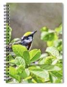 Chestnut Sided Warbler Spiral Notebook