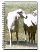 Cheviot Sheep 2 Spiral Notebook