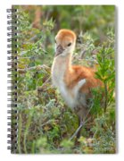 Chick 107 Spiral Notebook