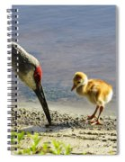 Chick At The Lake Spiral Notebook