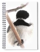 Chickadee-img-2147-001 Spiral Notebook