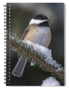 Chickadee On The Spruce Spiral Notebook