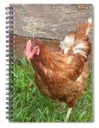 Chicken Portrait Spiral Notebook