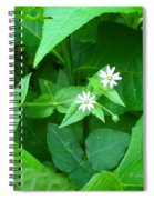 Chickweed Trio Spiral Notebook