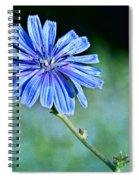 Chicory Spiral Notebook