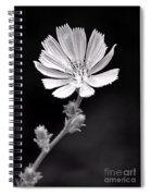Chicory Wildflower Spiral Notebook