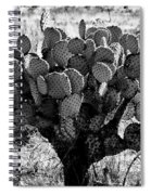 Chihuahua Desert Cactus Bw Spiral Notebook